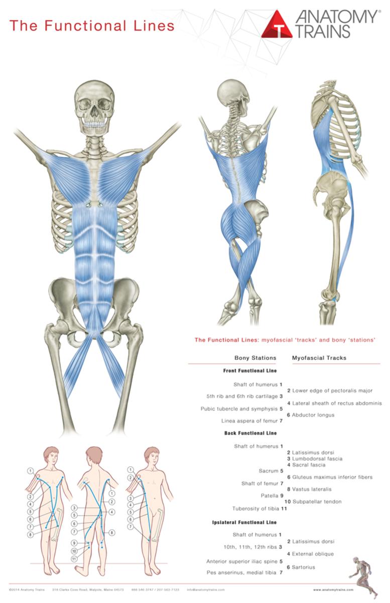Neu Im Shop Anatomy Trains Poster Art Of Motion