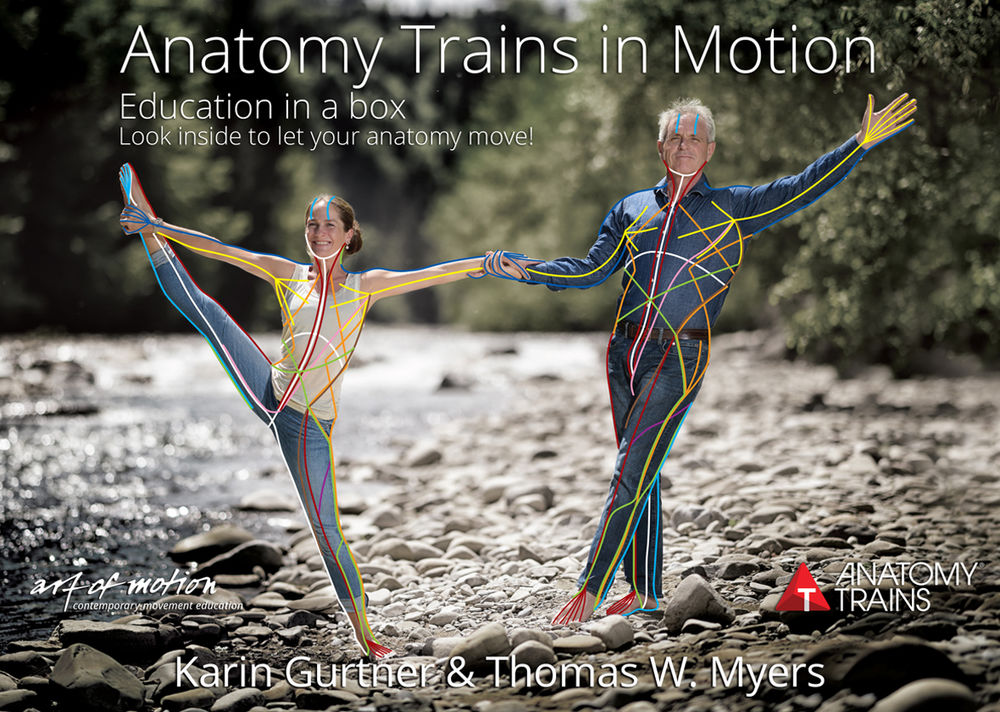 Anatomy Trains In Motion Flashcards Art Of Motion