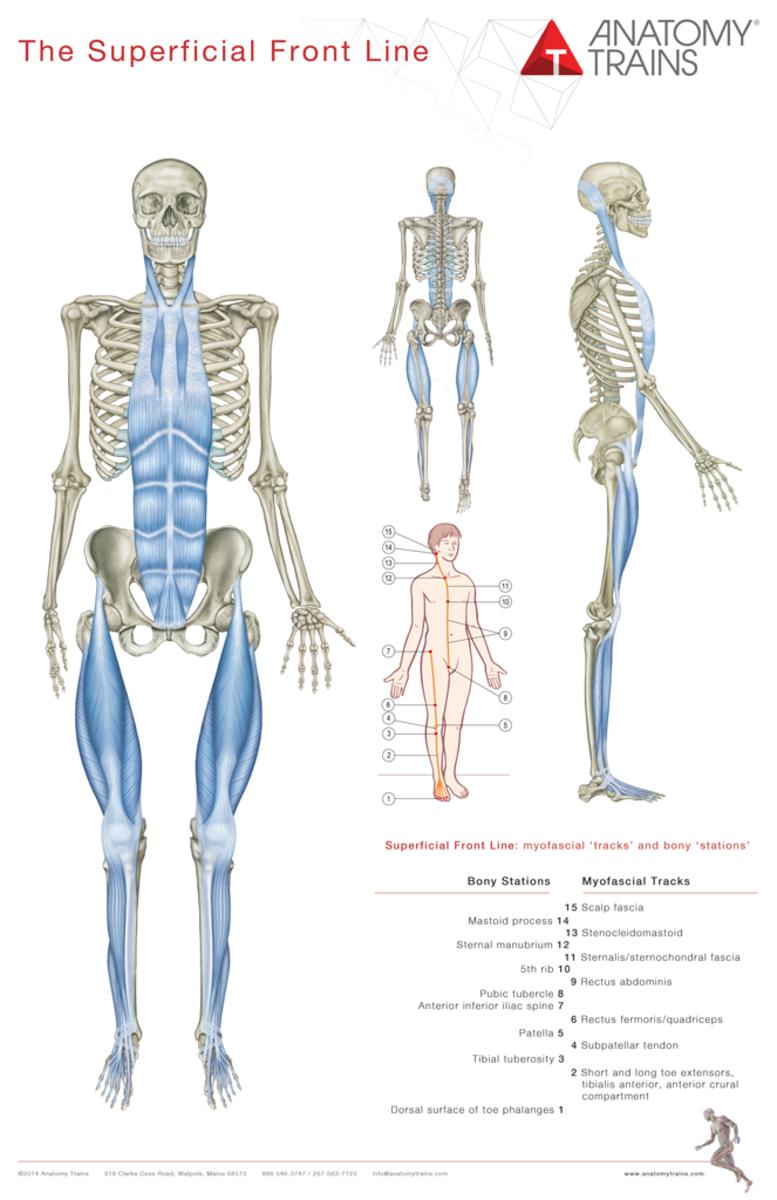 Beste Visuelle Anatomie Frei Zeitgenössisch - Anatomie Ideen ...