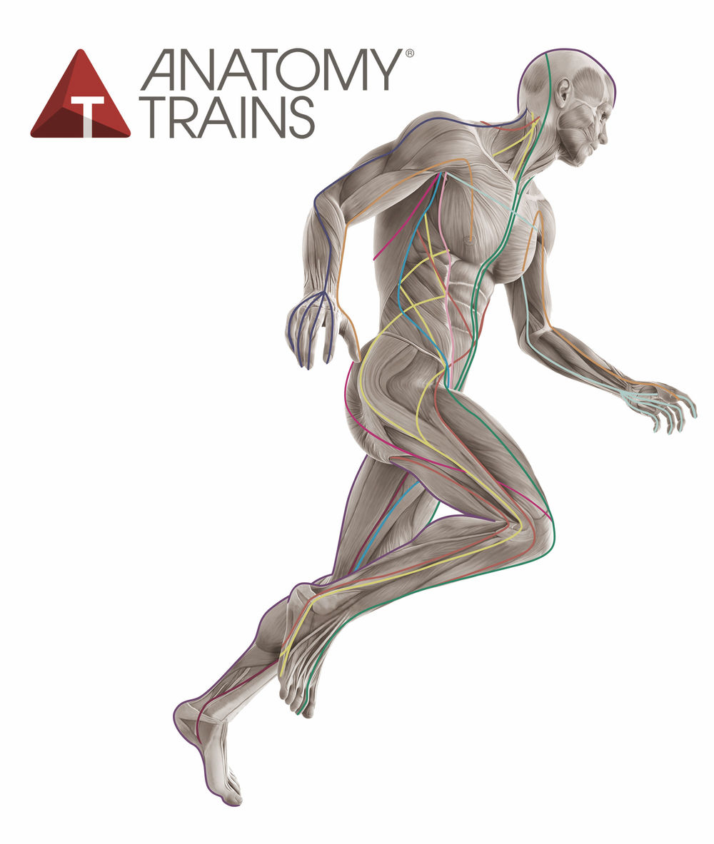 Anatomy Trains in Motion - art of motion